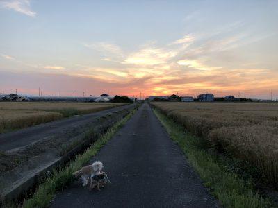アトリエ詩絵里 赤松の夕焼け
